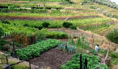 פורטוגל, חלק ב' – שתי משפחות ושני סיפורים מעמק הדואורו