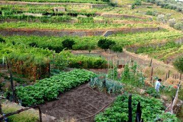 שתי משפחות ושני סיפורים מעמק הדואורו (פורטוגל)