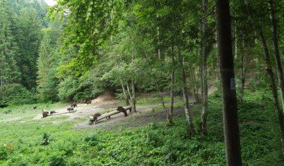 צפייה בדובים בטבע ברומניה
