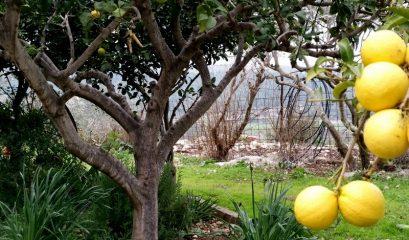 סיפור פשוט; על חאן אחד ומשפחה אחת בפאתי עמק יזרעאל – גליל תחתון