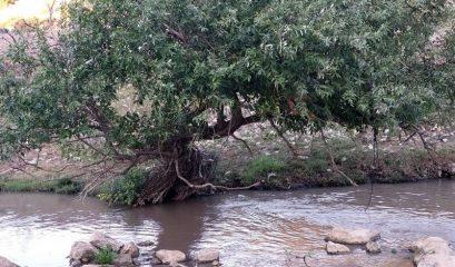 מים מחברים בין קהילות ואנשים בנחל ציפורי