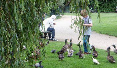איך להאכיל ברווזים, אווזים וברבורים?