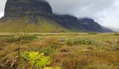 איסלנד – הטיול שלא היה